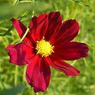 jamies flowers by stephenmakesart