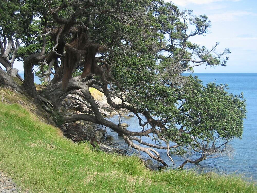 Coromandel Peninsula by mistresskelly
