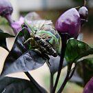 Cicada 1 by Lolabud