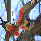 Birds of Colours by PhotosbyCris