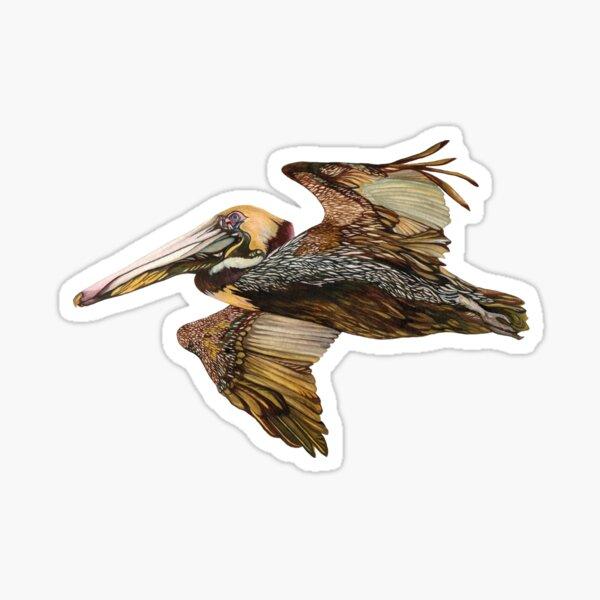 Brown Pelican Flight with Vintage Seafoam Stripe (California Bird) Sticker