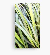 Long Grass Canvas Print