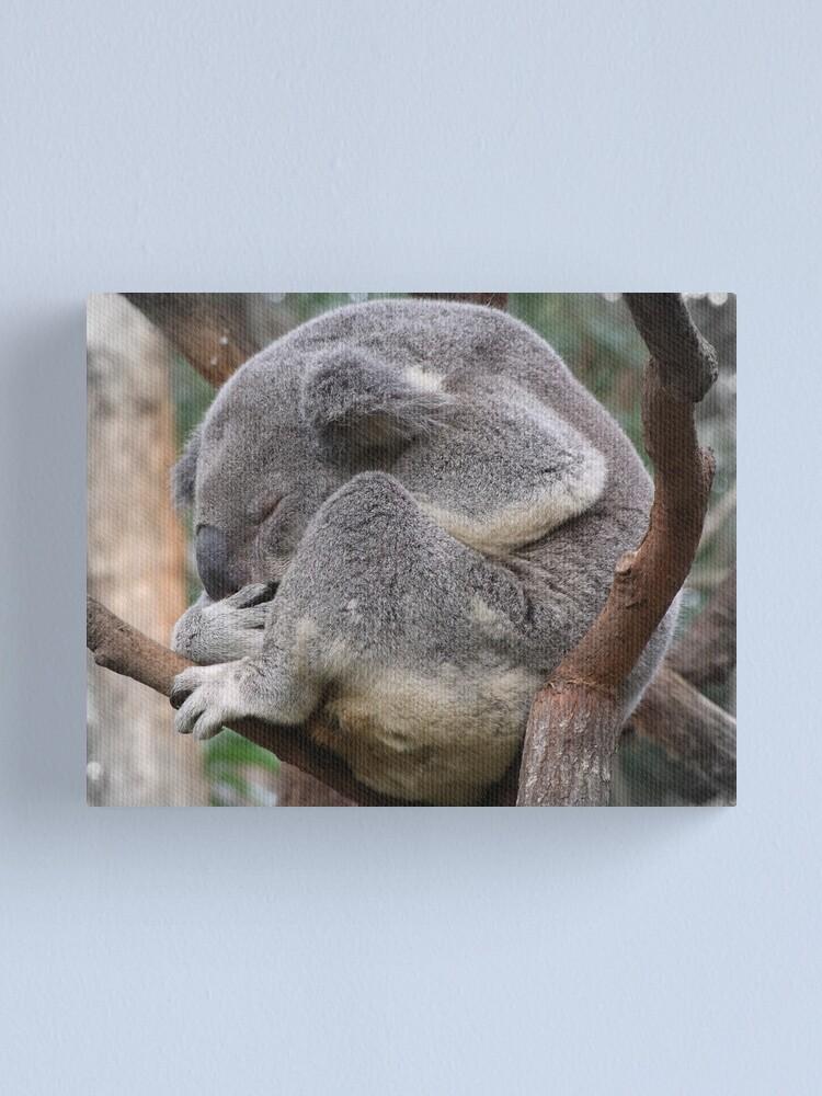 Alternate view of Koala Sleeping Canvas Print