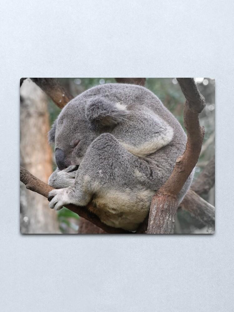 Alternate view of Koala Sleeping Metal Print