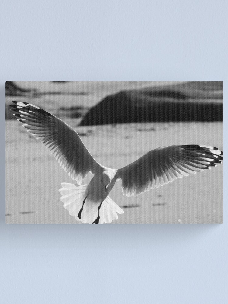 Alternate view of Seagull landing Canvas Print