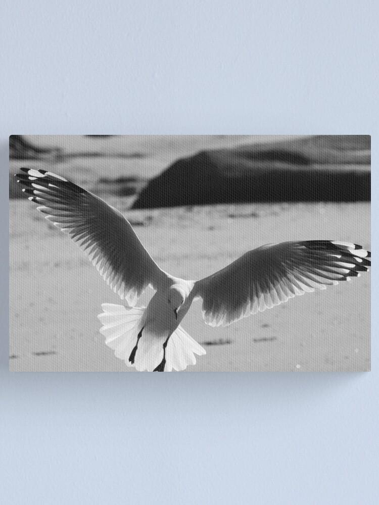 Alternate view of Seagull landing Canvas Print