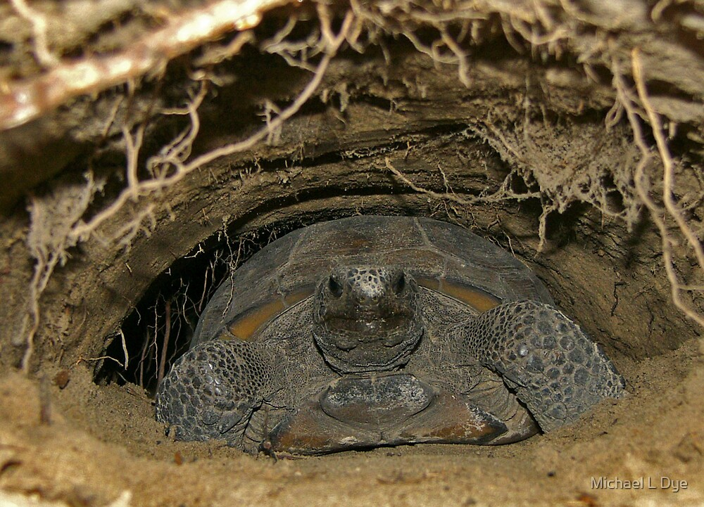 Gopher Tortoise by Michael L Dye