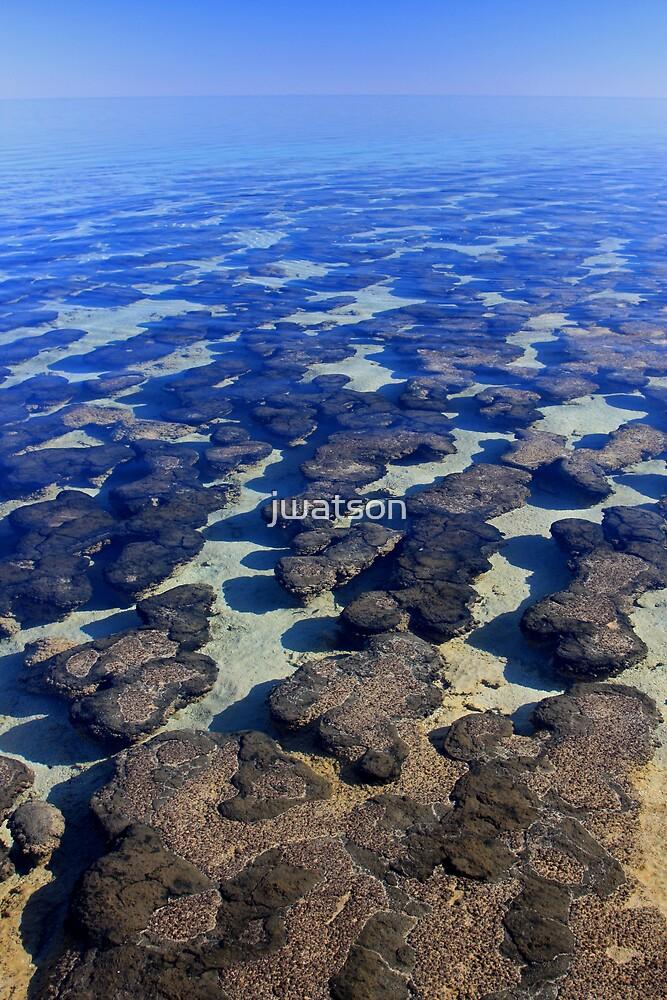 Hamelin Pool, Shark Bay by jwatson