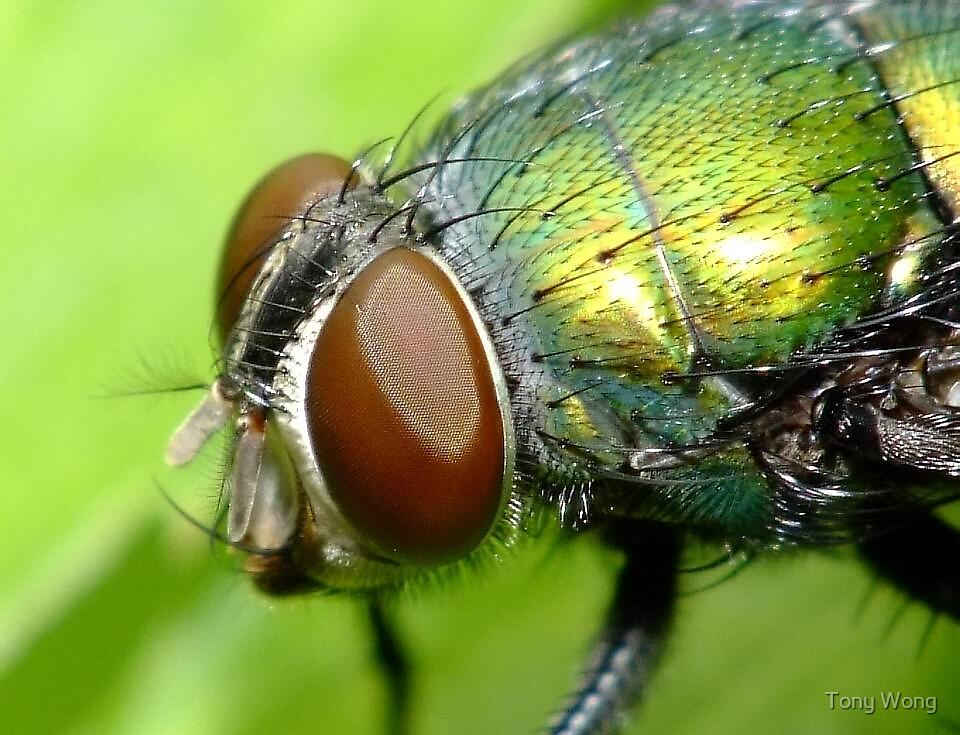 Ugly Fly... by Tony Wong