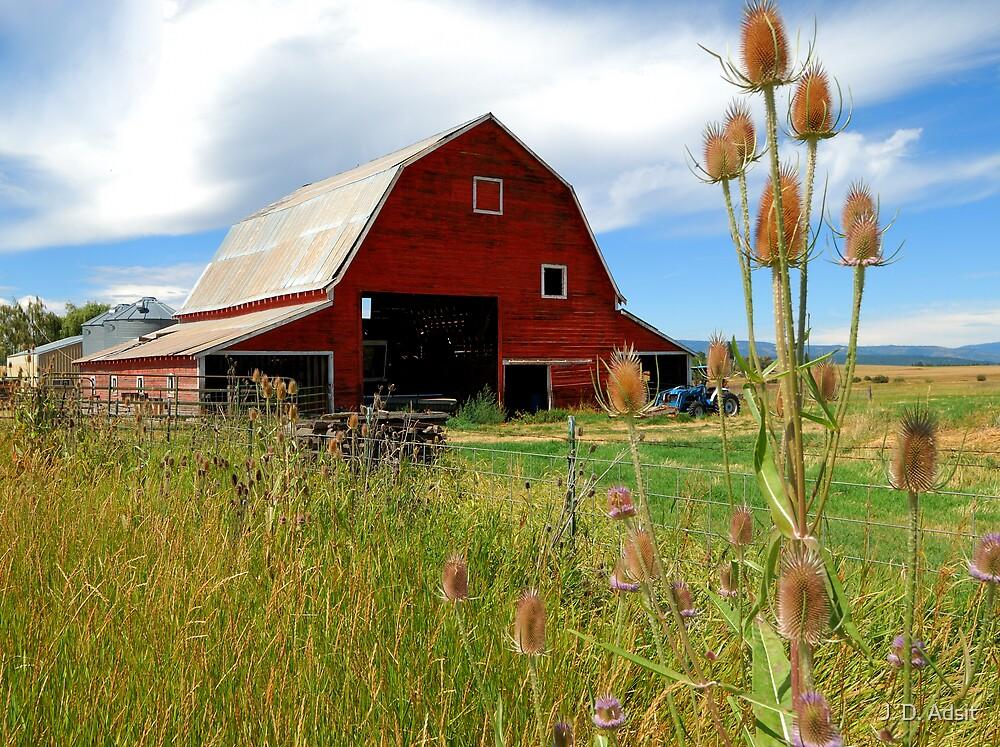 Barn & Thistle by J. D. Adsit