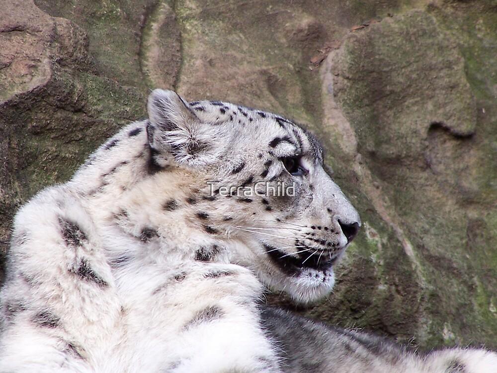 Snow Leopard by TerraChild