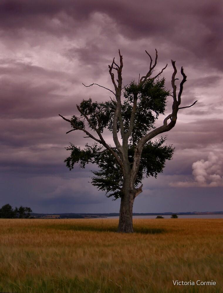 Black Isle tree by Victoria Cormie