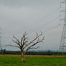 Pylons on Ash Island NSW by Phil Woodman