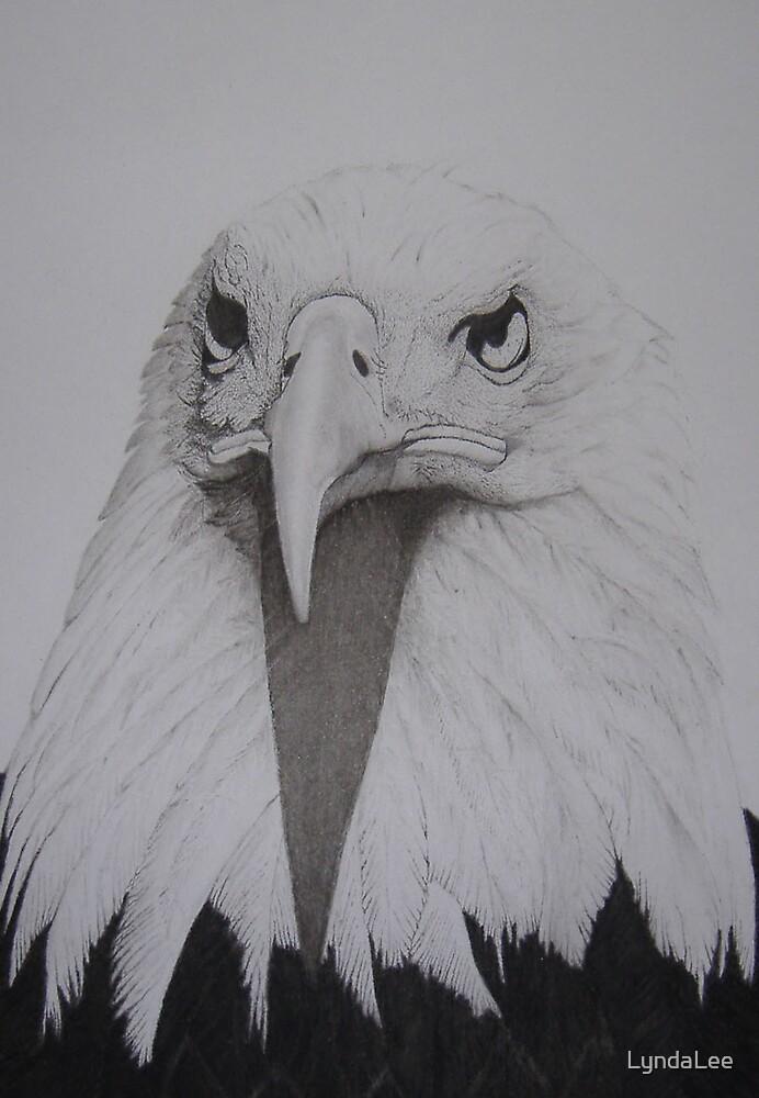 Eagle 01 by LyndaLee