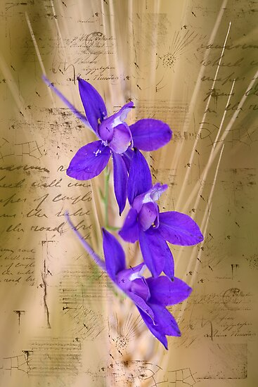 Letter To You by Viktoryia Vinnikava