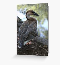 Goose of Central Park Zoo Greeting Card