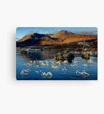 Frosted grasses 2  - Lochan na h-Achlaise Canvas Print