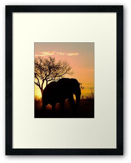 Sunset Stroll by Michael  Moss
