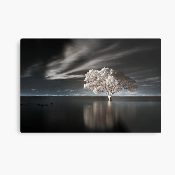 Tree in Water Metal Print