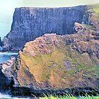 The Cliffs of Moher by Margaret Stevens