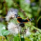 Butterfly by dozzie