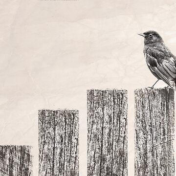 Blackbird by GavinScott