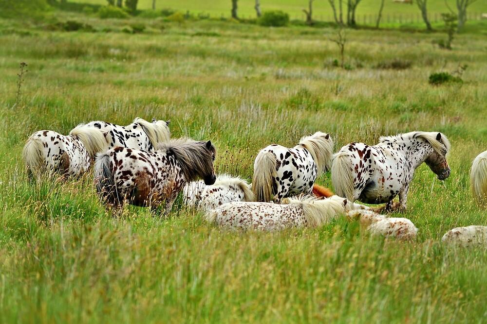 Apaloosa Horses Grazing by Alexandra Lavizzari