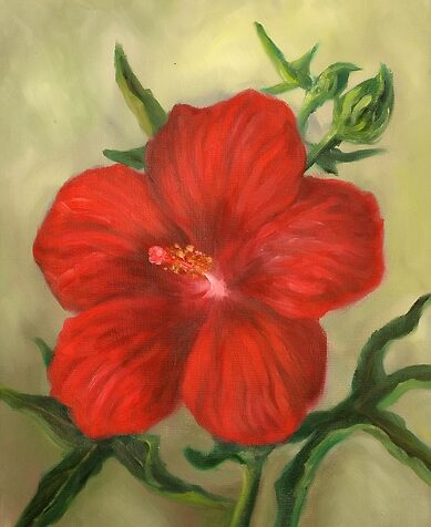 Red Hibiscus by Randy Burns
