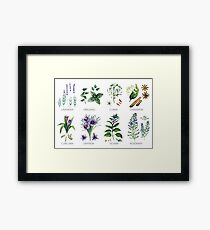 Watercolor botanical collection of herbs and spices Framed Print
