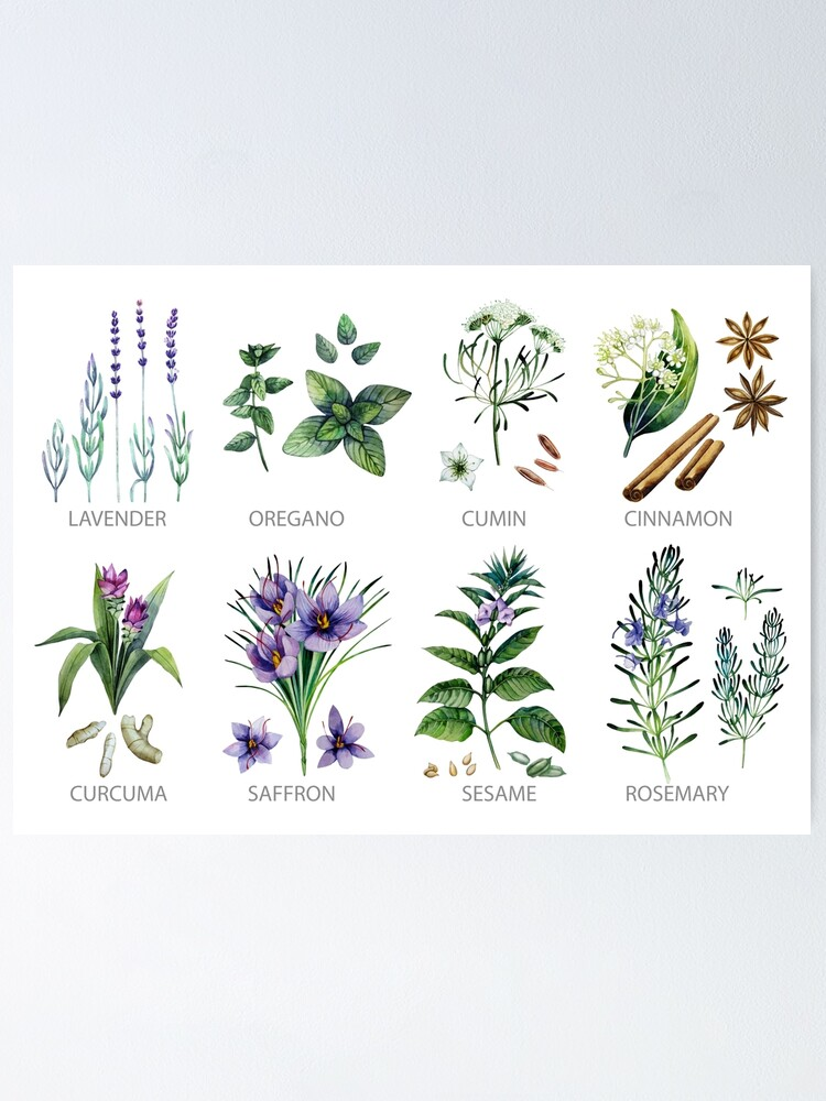 Alternate view of Watercolor botanical collection of herbs and spices Poster