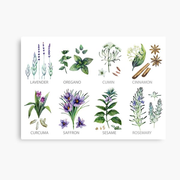 Watercolor botanical collection of herbs and spices Metal Print