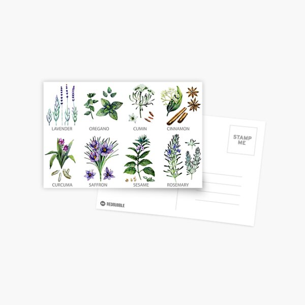 Watercolor botanical collection of herbs and spices Postcard