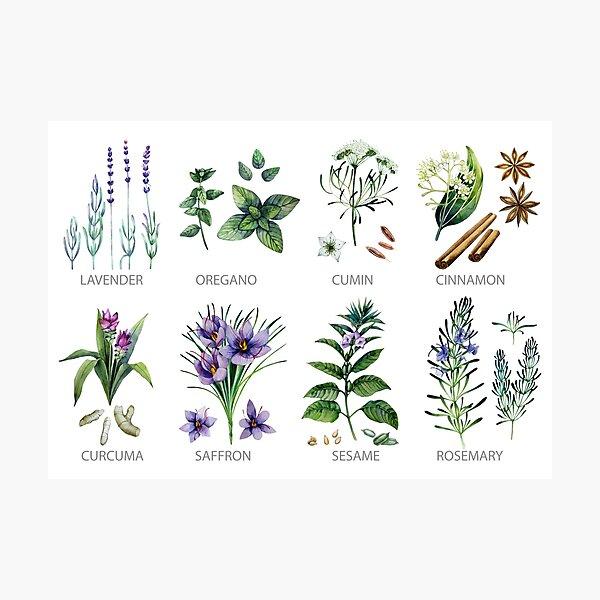 Aquarell botanische Sammlung von Kräutern und Gewürzen Fotodruck