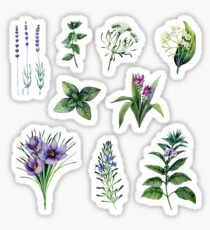 Watercolor botanical collection of herbs and spices Sticker