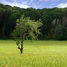 lone tree. by Jon Baxter