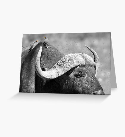 Birds on a buffalo Greeting Card