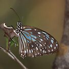 Butterfly of Butterfly bay  by Alexey Dubrovin