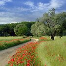 poppys  by Jon Baxter