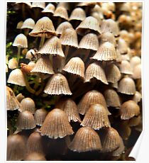 fungus Poster