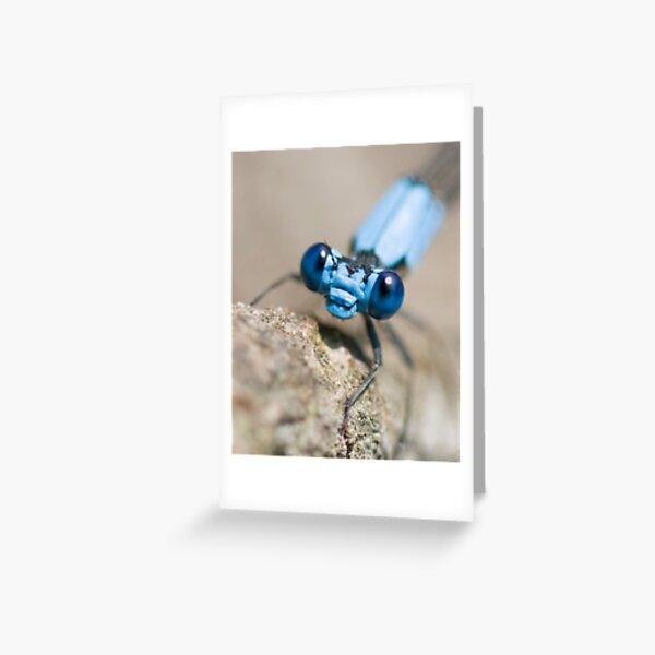 blue damselfly, close-up Greeting Card