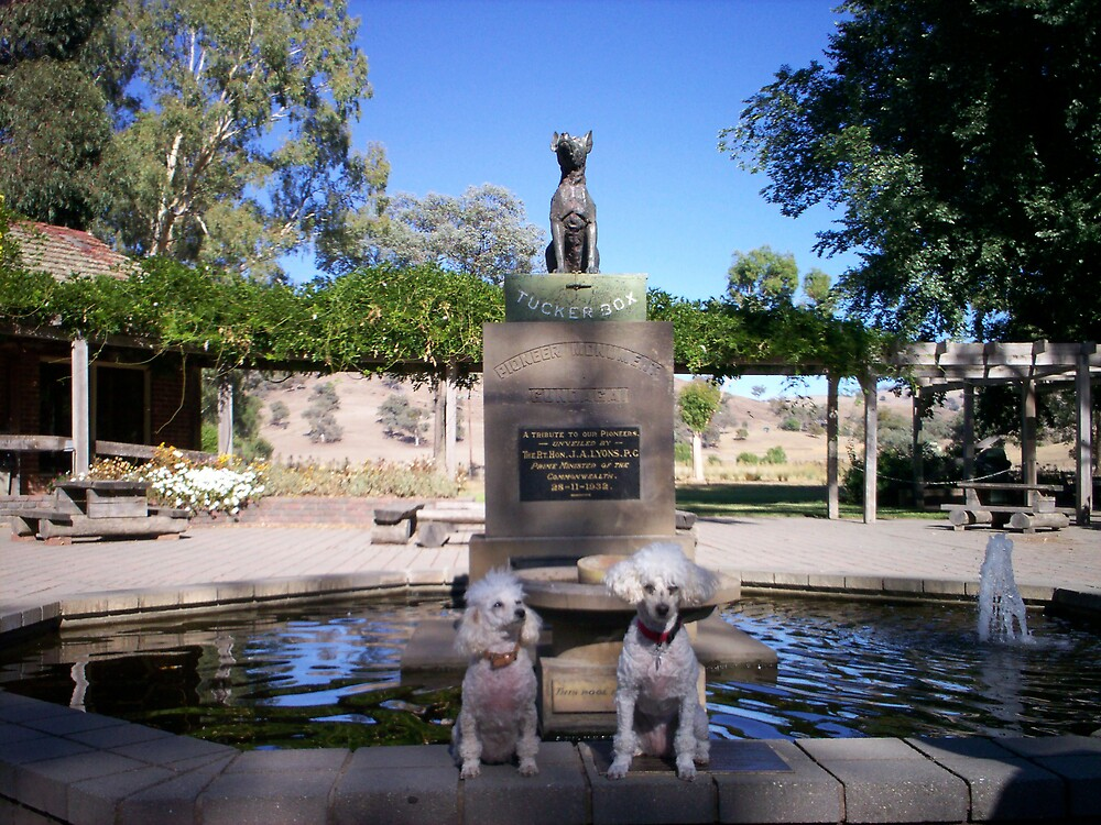 Dogs at the Dog on the Tuckerbox by Wendy 00000