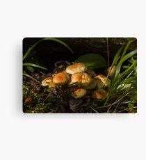Sulphur Tuft Fungi in Woodland Canvas Print