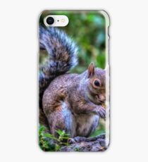 Grey squirrel iPhone Case/Skin