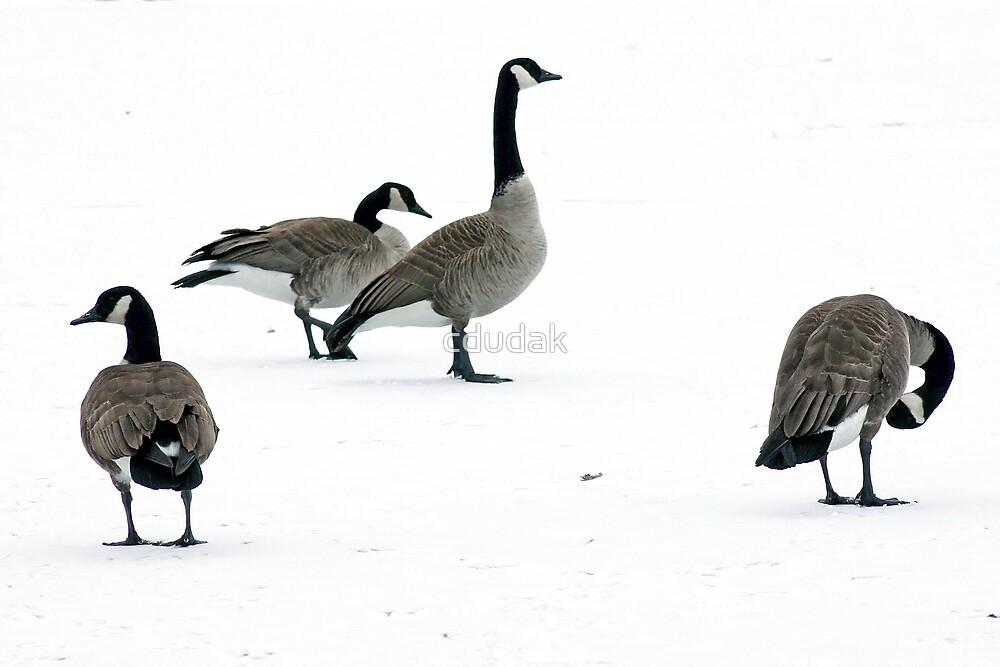 On Frozen Pond by cdudak