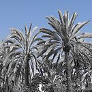 Palms by Lily