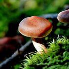 Trail Mushroom V by Kathleen Daley