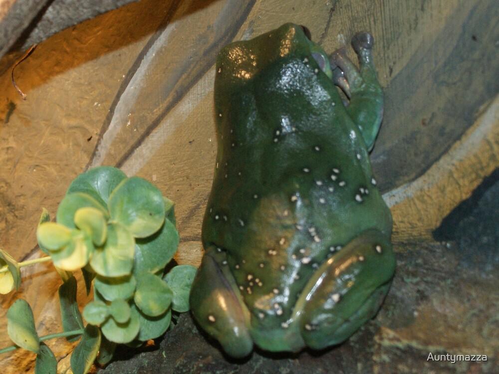 Green Tree Frog by Auntymazza