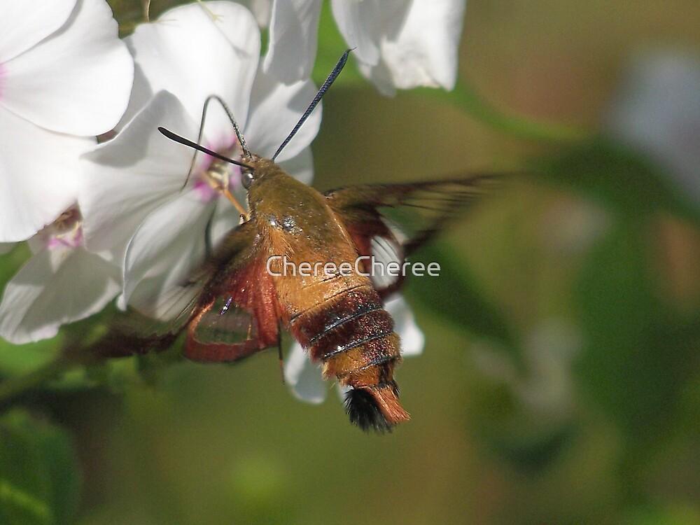 Hummingbird Moth * by ChereeCheree