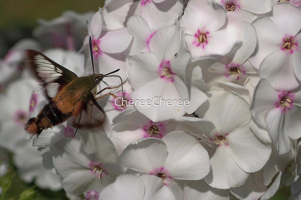 Hummingbird Moth ** by ChereeCheree