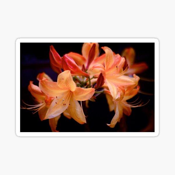 Graceful Azalea Lilies  Sticker